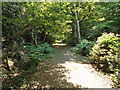 TL7805 : Post 1, Nature Trail by Roger Jones