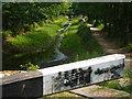 SU9256 : Basingstoke Canal Above Cowshot Bridge : Week 23
