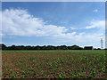 TQ5508 : Tile Barn Field by Simon Carey
