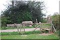 TQ8132 : Stile, High Weald Landscape Trail by N Chadwick