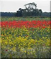 SE4207 : Colourful field by Steve  Fareham