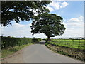 SJ4970 : Norton's Lane near Mouldsworth by Jeff Buck