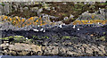 J5986 : Shore, Lighthouse Island near Donaghadee (1) by Albert Bridge