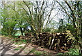 TQ7934 : Log pile by the High Weald Landscape Trail by N Chadwick