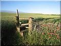 TA1004 : Poppies, stile and wheatfield : Week 25