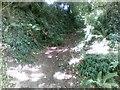SX5455 : Path off Back Lane near Plympton by Alex McGregor