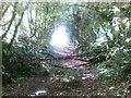 SX5455 : Path near Plympton by Alex McGregor