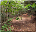 NY9750 : Path junction in woodland near Blanchland : Week 25