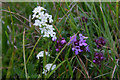 HP5803 : Heath Bedstraw (Galium saxatile) and Wild Thyme (Thymus serpyllum), Lund by Mike Pennington