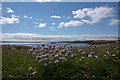HU5278 : Thrift on Cumlins, Heoga Ness by Mike Pennington
