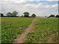 SE4870 : Footpath over fields towards Raskelf : Week 27