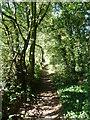 TQ4868 : Footpath towards The Warren by Marathon