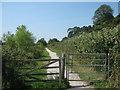 TQ9019 : Gates on the track below Cadborough Cliff (4) by David Anstiss