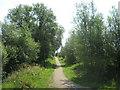 TQ9120 : Cyclepath to Gibbet Marsh by David Anstiss