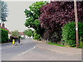 TL7829 : The Street, Gosfield, Essex by nick macneill