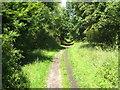 SU9278 : The Thames Path at Dorney Reach by Rod Allday