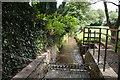 SX4760 : Upstream of Tamerton Foliot Stream by Mick Lobb