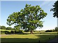 SP2852 : Oak near Walton Hall by Derek Harper