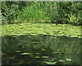 SP3165 : Water-lilies on the Leam: 2 by Robin Stott