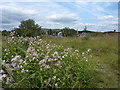 SK3990 : Wild flowers between canal and railway by Peter Barr