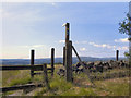 SD7513 : Stile and Signpost by David Dixon