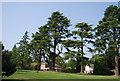 TQ5939 : Tall trees, Dunorlan Park by N Chadwick