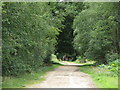 TM1036 : Bridleway in Holly Wood by Roger Jones