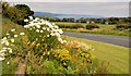 D4500 : Floral display, Islandmagee by Albert Bridge