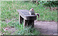 TQ4187 : Squirrel near Perch Pond by Roger Jones