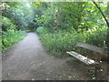 TQ4569 : Bench and path in Scabury Park by David Anstiss