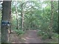 TQ4468 : Bridleway in Petts Wood by David Anstiss