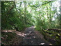 SJ9686 : Bridleway near the Peak Forest Canal by Peter Barr