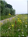 Dist:0.5km<br/>Wild flowers brighten up the footpath from Bourne Wood and the edge of Swanley as it heads towards Hockenden. The A20 is just off to the right and Joydens Wood is on the right hand horizon.