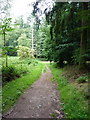 SO7489 : Footpath in the woods near Brim Pool by Richard Law