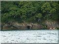 SW8337 : Cave & Canoe on the Fal by Steve Barnes