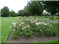 TQ1376 : Roses in Lampton Park by Ian Yarham