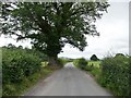SO5576 : Roadside tree on the lane to Henley by Christine Johnstone