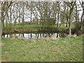 TL6656 : Small pond by Stetchworth Park Farm by Hugh Venables