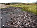 NY7929 : Remains of ancient pine forest in peat at Great Cocklake by Andrew Curtis