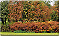 J2764 : Autumn colours, Lisburn by Albert Bridge
