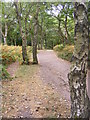 SO8282 : Kinver Ridge Path by Gordon Griffiths