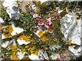 NG6113 : A veritable mini-garden : Week 34