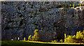 SD4972 : Walking the dog, Warton Main Quarry : Week 34