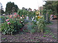 TL9836 : Allotment Flowers by Roger Jones