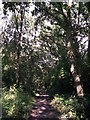 TQ4466 : Footpath in Roundabout Wood (2) by David Anstiss