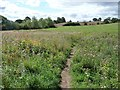 SE3936 : Footpath through thistles by Christine Johnstone