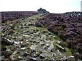 SO3698 : Rocky path on the Stiperstones north of Manstone Rock by Jeremy Bolwell