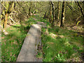 SD9924 : Boardwalk on the footpath through Broadhead Clough by Phil Champion