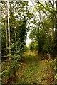 SU4593 : Bridleway through the trees by Steve Daniels