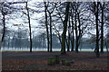 SJ8094 : Mist in Longford Park, Stretford by Phil Champion